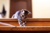 Kitten on staircase, indoors — Stock Photo