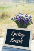 Spring break concept. Beautiful wild flowers in vase and frame on field background — Stock Photo