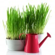 Fresh green grass in small metal bucket and decorative watering can, isolated on white — Stock Photo #68115763