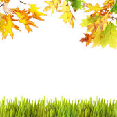Beautiful autumn background with leaves and grass — Stock Photo