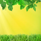 Beautiful spring background with leaves and green grass — Stock Photo