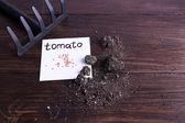 地面と木の背景にすくいの紙の部分にトマト種 — ストック写真