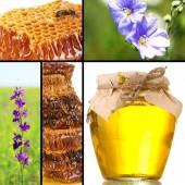 Collage di apicoltura — Foto Stock