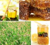 Beekeeping collage — Stock fotografie
