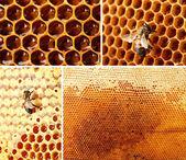 Collage de apicultura — Foto de Stock