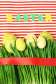 Easter eggs and grass on colorful paper background — Stock Photo