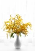 Beautiful sprigs of mimosa in vase on windowsill — Stock Photo