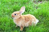 Kleine Hase im Gras — Stockfoto
