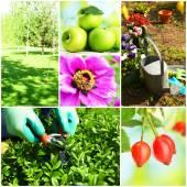 работающий в саду коллаж — Стоковое фото