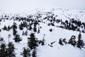 Snowy mountains in wintertime — Stock Photo