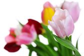 Fresh bouquet with tulips on blurred background — Foto de Stock