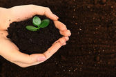 Female handful of soil with small green plant, closeup — Stock Photo