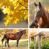 Collage of beautiful brown horse in pasture — Stockfoto