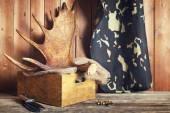 Moose antler — Stock Photo