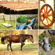 Countryside collage — Stock Photo #69565119