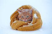 Beautiful red cat wrapped in scarf on snow background — Stock Photo