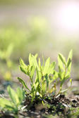 Green plant with sun rays — Stock Photo