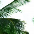 Green leaves of exotic palm tree and blue sky — Stock Photo #69868653