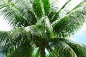 Green leaves of exotic palm trees — Foto de Stock