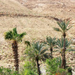 Green palm trees on red hills background — Stock Photo #69964401