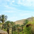 Green palm trees on red hills background — Stock Photo #69964409