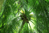 Green leaves of exotic palms — Stock Photo