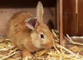 Cute rabbit in barn, close up — Stock Photo