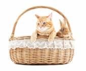 Red cat and rabbit in wicker basket isolated on white — Stock Photo