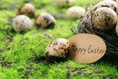 Bird eggs in nest on green grass background — Stock Photo