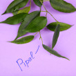 Green pipal twig with inscription on paper background — Stock Photo #70815133