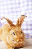 Cute rabbit on sofa — Stock Photo