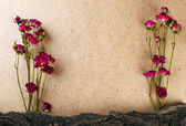 Dried roses with bark on plywood background — Stock Photo
