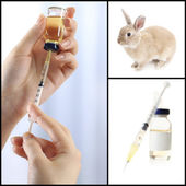 Vaccination and treatment of animals, collage — Stock Photo