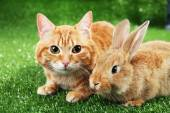 Red cat and rabbit on green grass background — Stock Photo