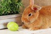 Cute red rabbit — Stock Photo