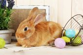 Cute red rabbit — Stock Photo