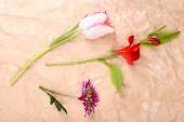 Flores en papel — Foto de Stock