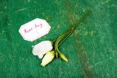 Beautiful rosy twig with tag on wooden background — Stok fotoğraf