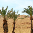 Green palm trees on red hills background — Stock Photo #71227049