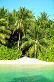 Beautiful view of coast with exotic trees in resort — Stock Photo