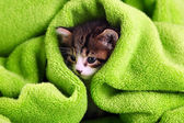Cute little kitten with towel, close up — ストック写真