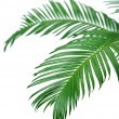 Green palm branches on light background — Stock Photo #71288289