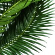Green palm branches on light background — Stock Photo #71288295