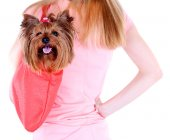 Woman holding cute Yorkshire terrier in bag isolated on white — Stock Photo
