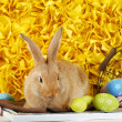 Cute red rabbit with Easter eggs on shelf on yellow fabric background — Stock Photo #71378083