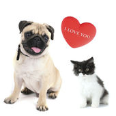 Cat and dog with red heart — Stockfoto