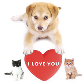 Cute pets with big heart isolated on white — Stock Photo