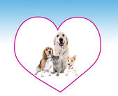 Cute pets in big heart frame on light blue background — Stock Photo