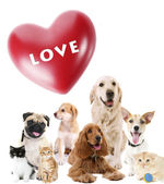 Cute pets with big heart on light background — Stockfoto
