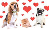 Cute pets on light background with hearts — Stockfoto